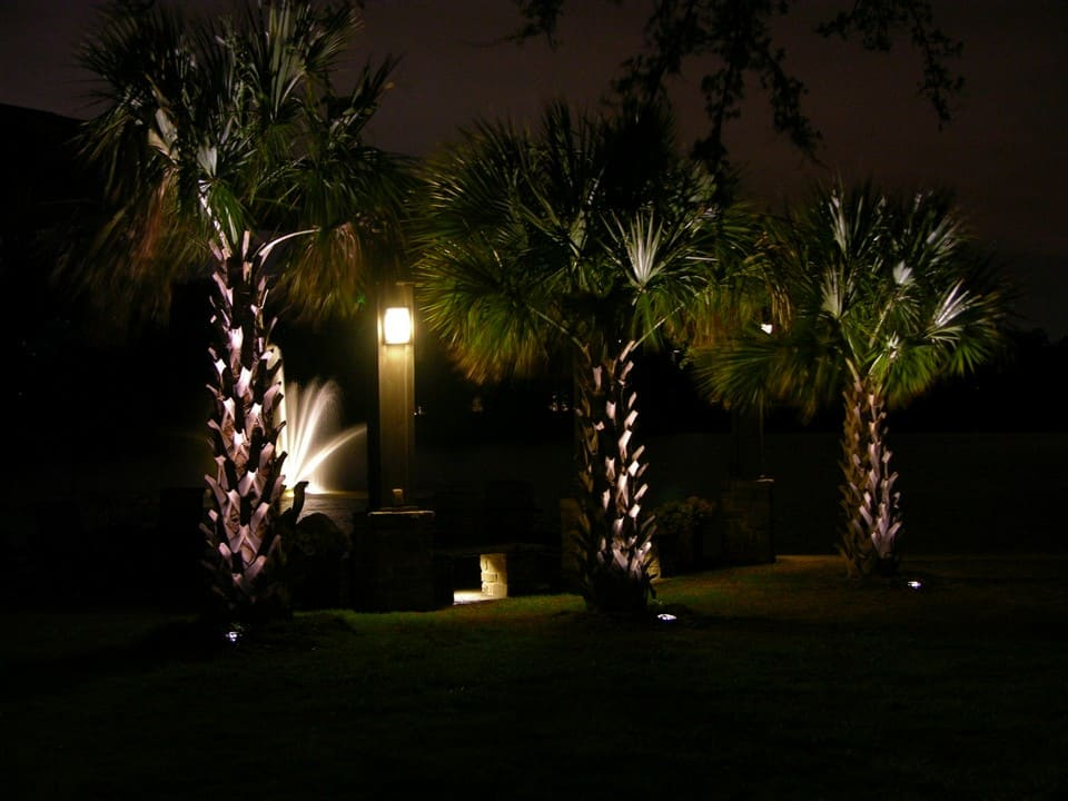 Well Groomed Pine Trees seen by the light of an outdoor fixture