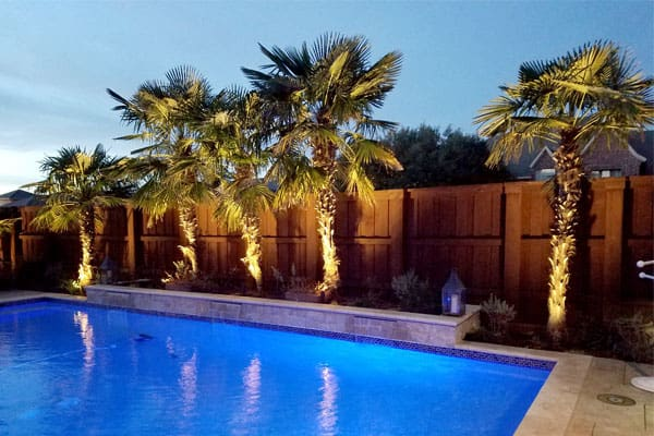 Palm trees lit up at night next to pool